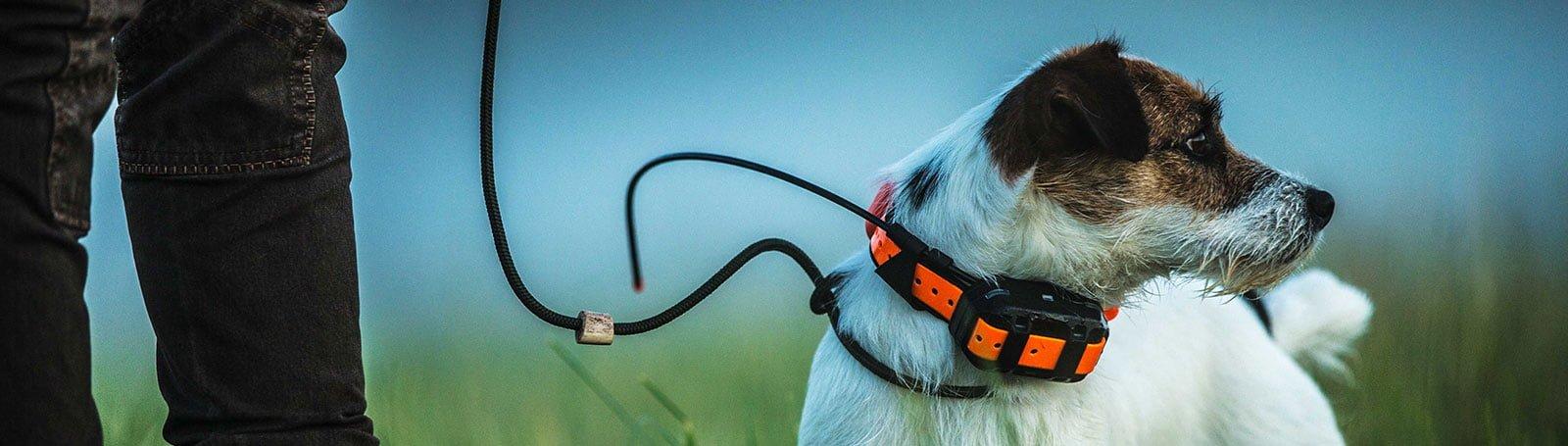 Rase de câini în competiție